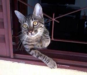 Diariamente, Nicinha posta suas conquistas para seus seguidores. Nesta imagem, a gata ''conta'' que conseguiu subir na janela. (Reprodução/Facebook)
